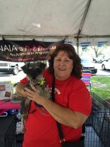 bailey, schnauzer, dog, adopted