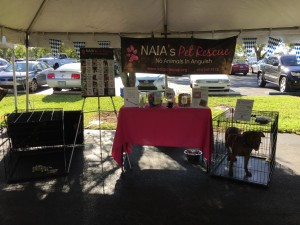 NAIA, adoption, event, rescue