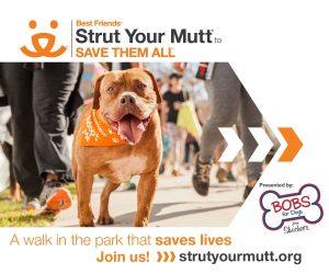 Strut your mutt fundraiser rescue walk