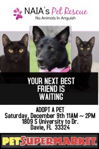 Pet adoption event flyer